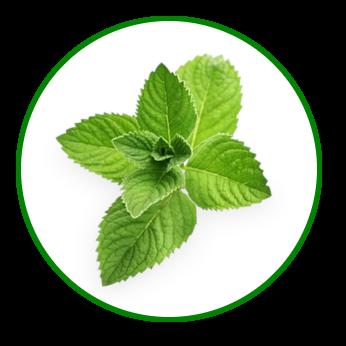 Motion Free – compoziție: ingrediente 100% naturale pentru tratamentul problemelor sistemului osteo-muscular!